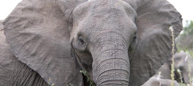 The Earth Awaits: Eating the Elephant